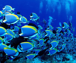 fish, ocean, and blue image