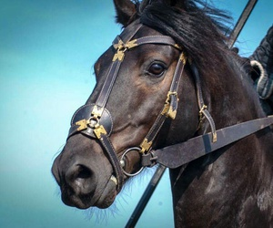 beauty, black, and horse image