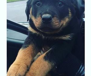 baby, dog, and sweet image