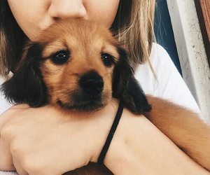 adorable, pet, and puppy image