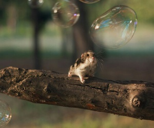 cute, animal, and bubbles image