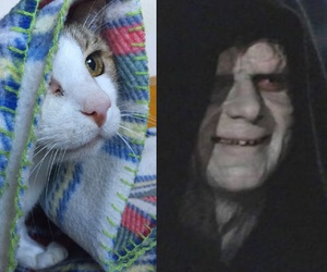 blanket, palpatine, and cat image