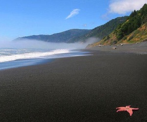 beach, sand, and starfish image