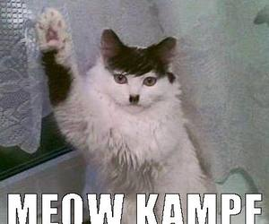 funny cats, hitler cat, and kitler image