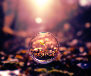 amazing, photography, and sprout image