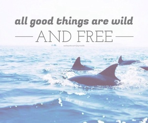 quote, free, and wild image