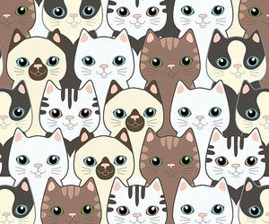 cat, wallpaper, and kitten image
