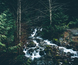 adventure, hiking, and nature image