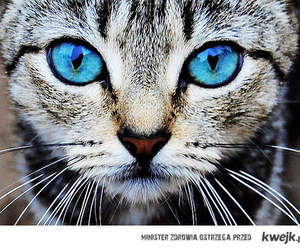 blue, cat, and eye image