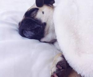 coco, pug, and sleepy image