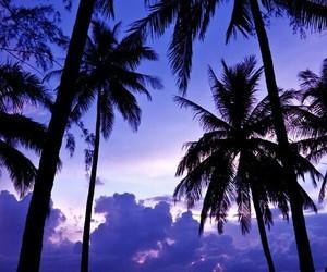 beach, purple, and summer image