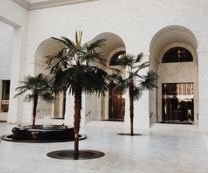 palms and travel image