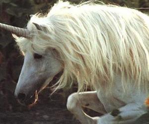 unicorn, horse, and white image