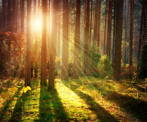 forrest, light, and morning image