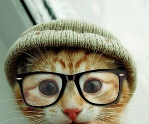 cat and hipster image