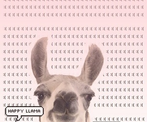 llama, wallpaper, and background image