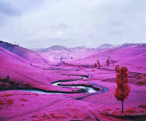 pink, nature, and landscape image