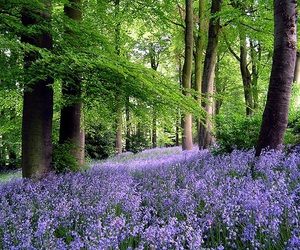 trees, flowers, and woods image