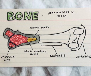 biology, medical, and notes image