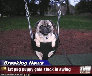 pug, funny, and cute image