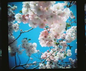 blue sky and flowers image