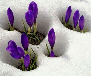 flowers, snow, and nature image