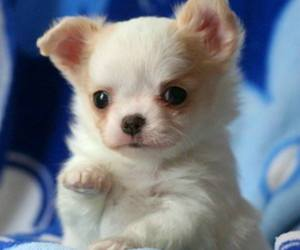 baby animals, cute animals, and puppy image