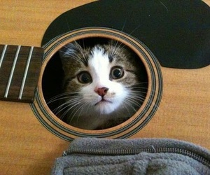 cat, guitar, and kitten image