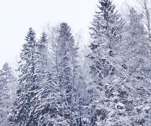 finland, forest, and january image