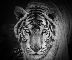 black&white, blue, and eyes image