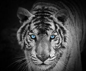 black&white, blue, and eyes image