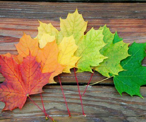 color, colorful, and leaf image