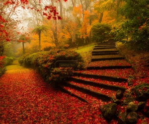 arbres, beautiful, and feuilles image