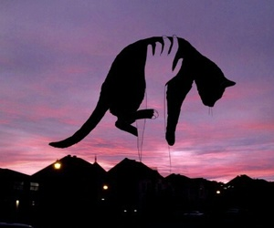 cat, grunge, and sky image