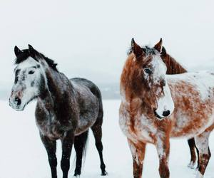horse, snow, and animals image
