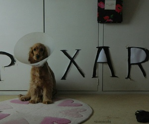 dog, pixar, and disney image