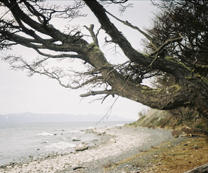 photography, tree, and waves image