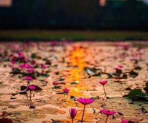 Cambodia, flowers, and sunrise image