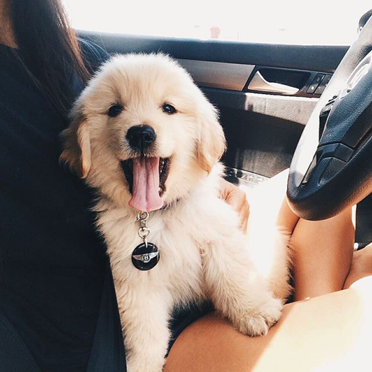 127 Images About Puppys On We Heart It See More About Dog Animal And Puppy