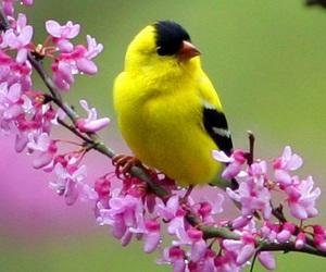 amazing, bird, and nature image