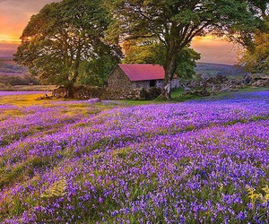 nature, flowers, and purple image