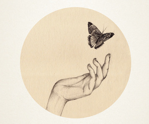butterfly, drawing, and hand image