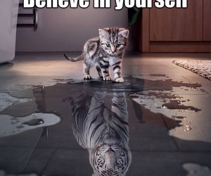 believe, cat, and tiger image