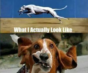 basset, basset hound, and funny image