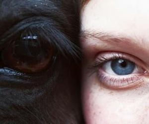 horse, eyes, and animal image