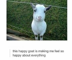 happy, cute, and goat image