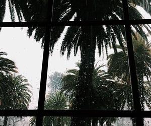 rain and tropical image
