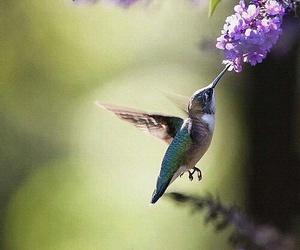 bird, flowers, and hummingbird image