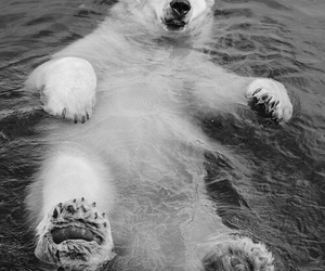 animals, Polar Bear, and white image