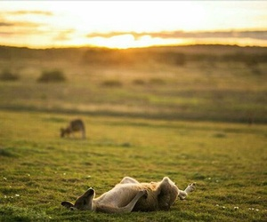 kangaroo, sunshine, and relax image